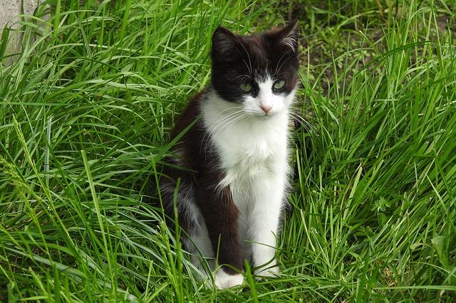 wapno na trawnik