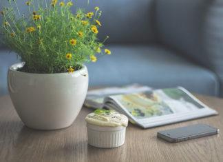 Jak dbać o rośliny doniczkowe?