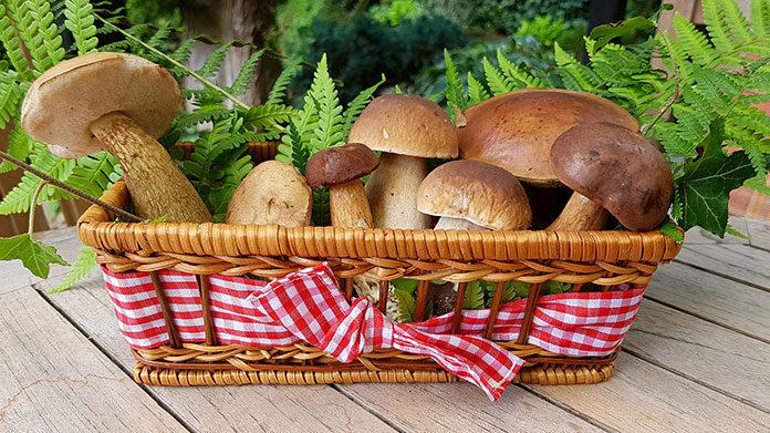 Suszarka do grzybów, owoców i warzyw – co warto o niej wiedzieć?