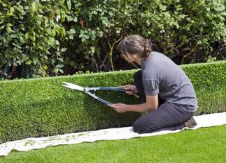 Jak wybrać profesjonalne nożyce ogrodowe