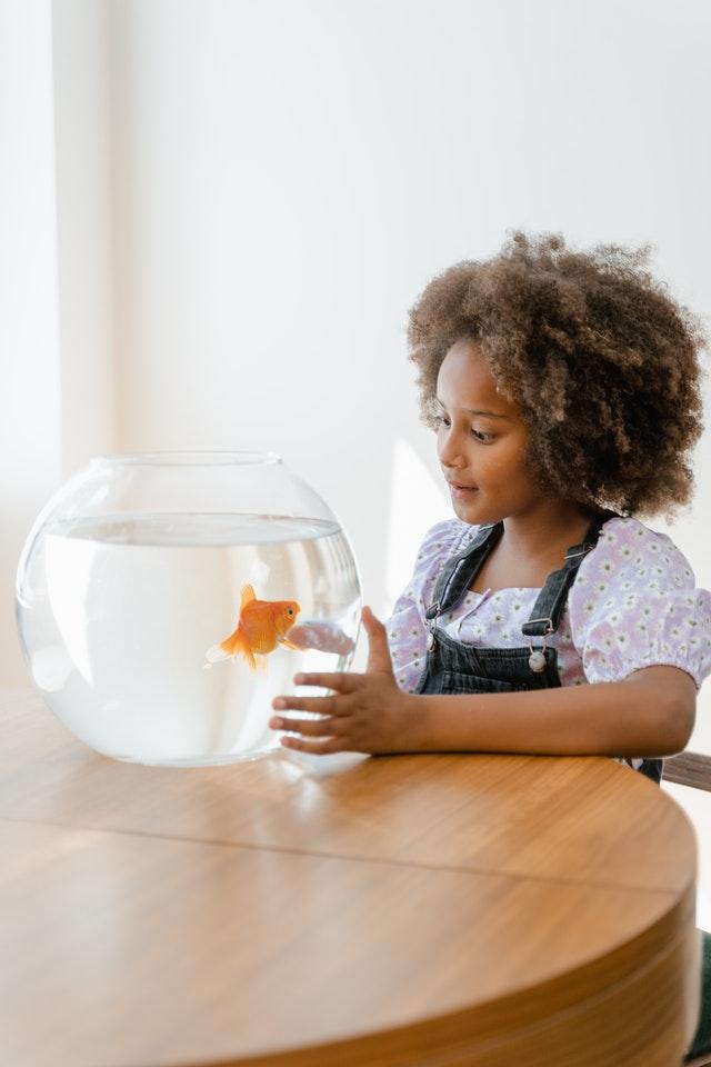 Dlaczego nie powinno się hodować rybek w szklanej kuli